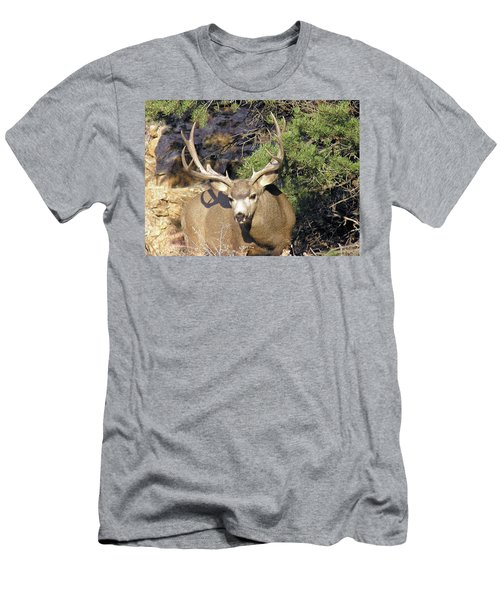 Muledeerbuck6 Men's T-Shirt (Athletic Fit)