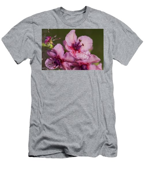 Mullein In The Mist Men's T-Shirt (Athletic Fit)