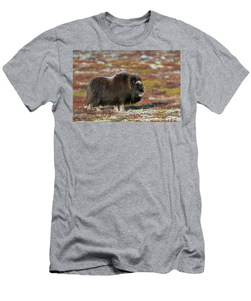 Muskox Men's T-Shirt (Athletic Fit)
