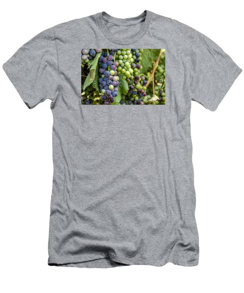 Natures Colors In Wine Grapes Men's T-Shirt (Athletic Fit)