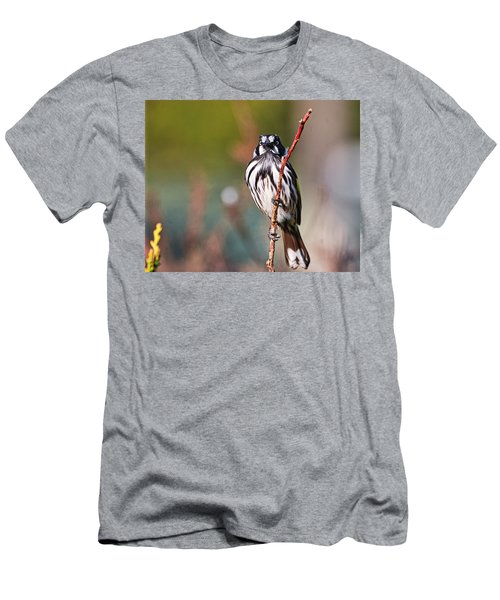 New Holland Honeyeater  Men's T-Shirt (Athletic Fit)