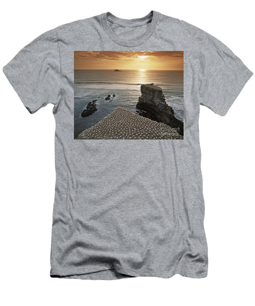 Men's T-Shirt (Athletic Fit) featuring the photograph new zealand gannet colony at muriwai beach ,gannet fly from Muri by Juergen Held