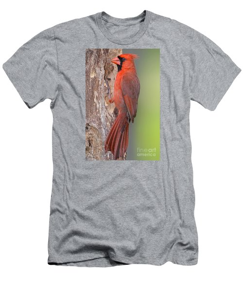 Northern Cardinal Male Men's T-Shirt (Slim Fit) by Bonnie Barry