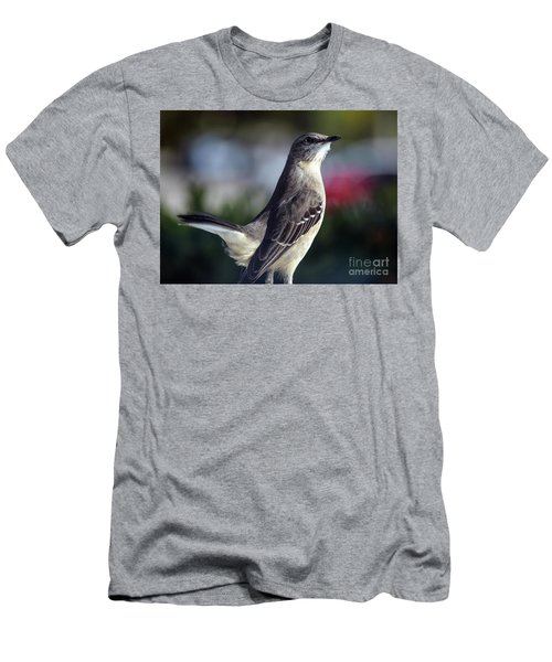 Northern Mockingbird Up Close Men's T-Shirt (Athletic Fit)