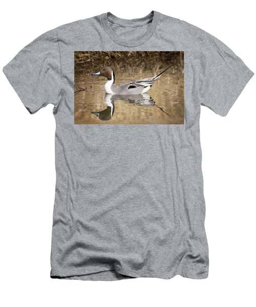 Northern Pintail Drake Men's T-Shirt (Athletic Fit)