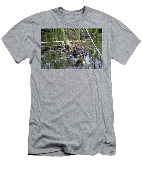 Northern Waterthrush Men's T-Shirt (Athletic Fit)