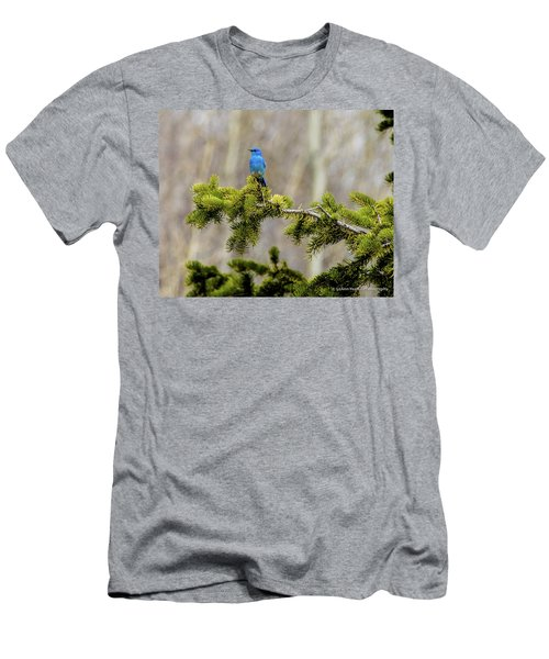 Notice The Pretty Bluebird Men's T-Shirt (Slim Fit) by Yeates Photography