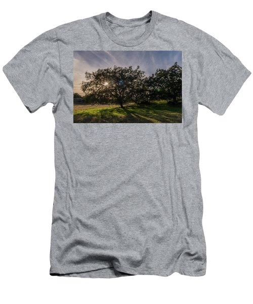 Oak Sunburst Men's T-Shirt (Athletic Fit)