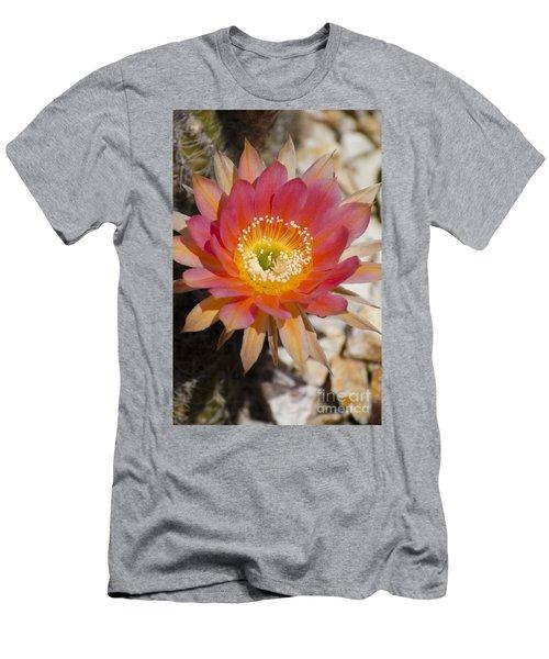 Orange Cactus Flower Men's T-Shirt (Athletic Fit)