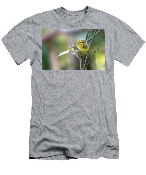 Orchard Oriole Men's T-Shirt (Athletic Fit)