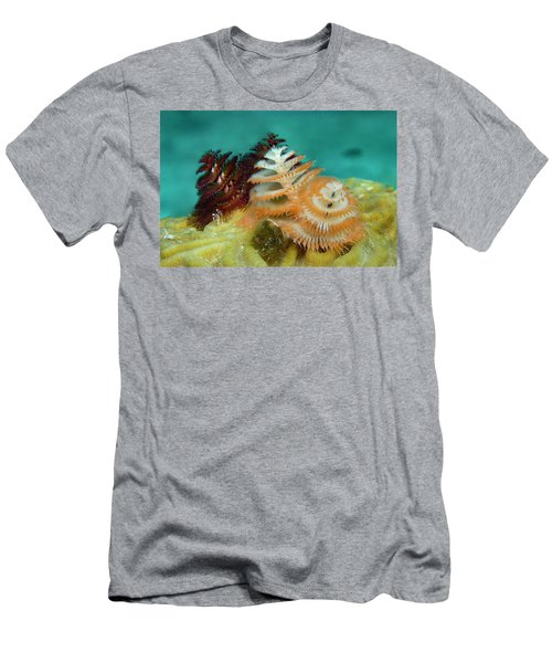 Men's T-Shirt (Slim Fit) featuring the photograph Pair Of Christmas Tree Worms by Jean Noren