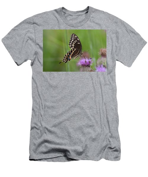 Palamedes Swallowtail And Friends Men's T-Shirt (Athletic Fit)
