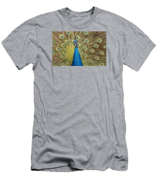 Peacock Splendor Men's T-Shirt (Athletic Fit)