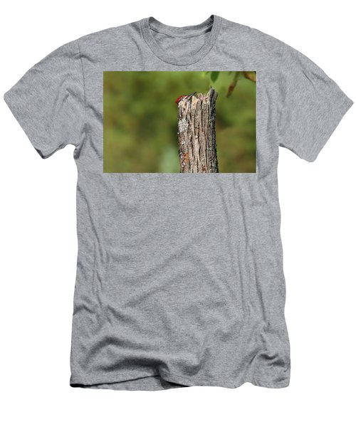 Peek A Boo Pileated Woodpecker Men's T-Shirt (Athletic Fit)