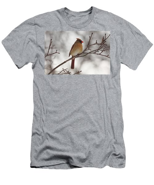 Perched Female Red Cardinal Men's T-Shirt (Slim Fit) by Debbie Oppermann