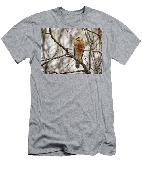 Perched Red Shouldered Hawk Men's T-Shirt (Athletic Fit)