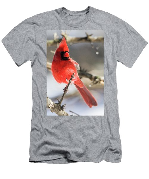 Perching Mister Cardinal Men's T-Shirt (Athletic Fit)