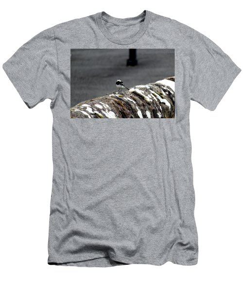 Pied Wagtail Men's T-Shirt (Athletic Fit)