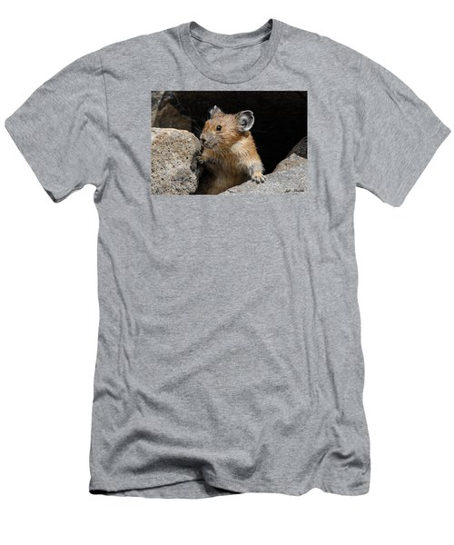 Pika Looking Out From Its Burrow Men's T-Shirt (Athletic Fit)