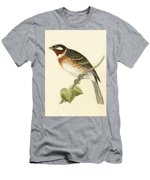 Pine Bunting Men's T-Shirt (Athletic Fit)