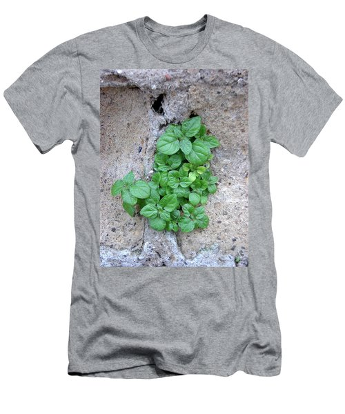 Plant In Stone Naples Italy Men's T-Shirt (Athletic Fit)
