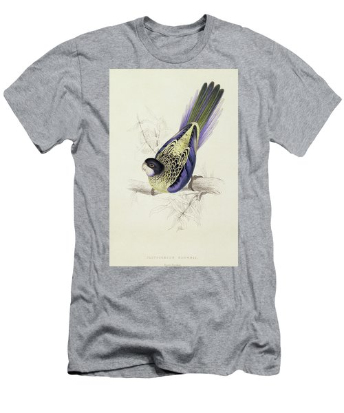 Platycercus Brownii, Or Browns Parakeet Men's T-Shirt (Slim Fit) by Edward Lear