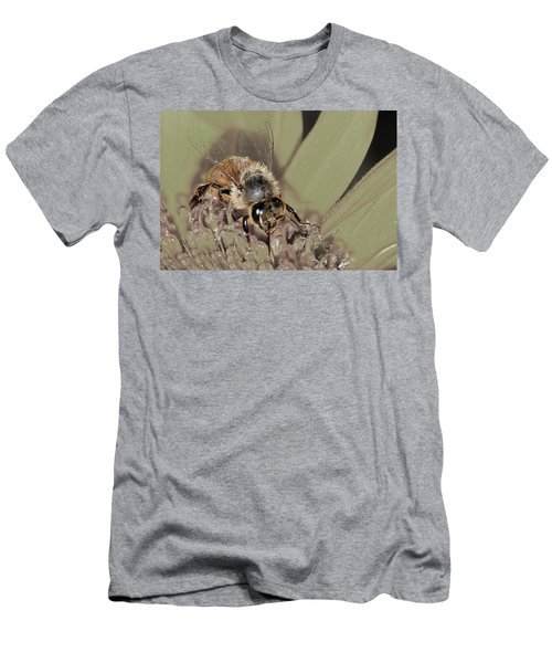 Pollinating Bee Men's T-Shirt (Athletic Fit)