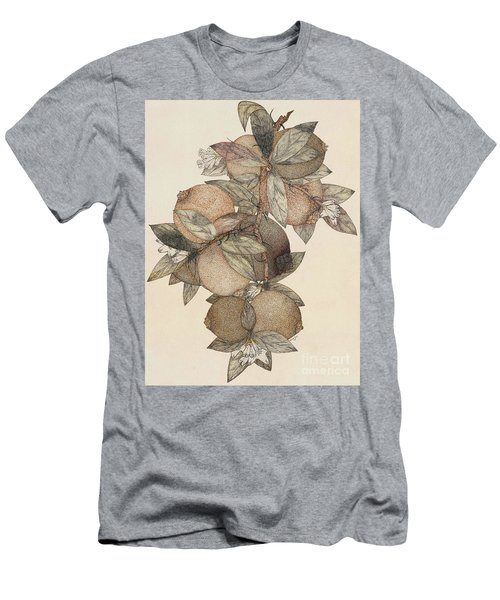 Pomegranate Fruit, 1867 Men's T-Shirt (Athletic Fit)