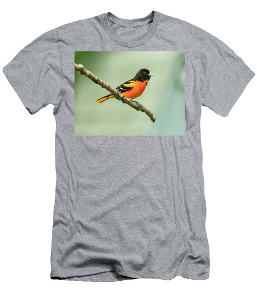Portrait Of A Singing Baltimore Oriole Men's T-Shirt (Athletic Fit)
