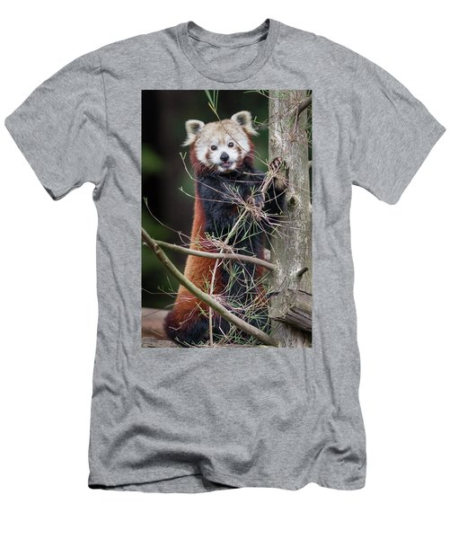 Portrat Of A Content Red Panda Men's T-Shirt (Slim Fit) by Greg Nyquist