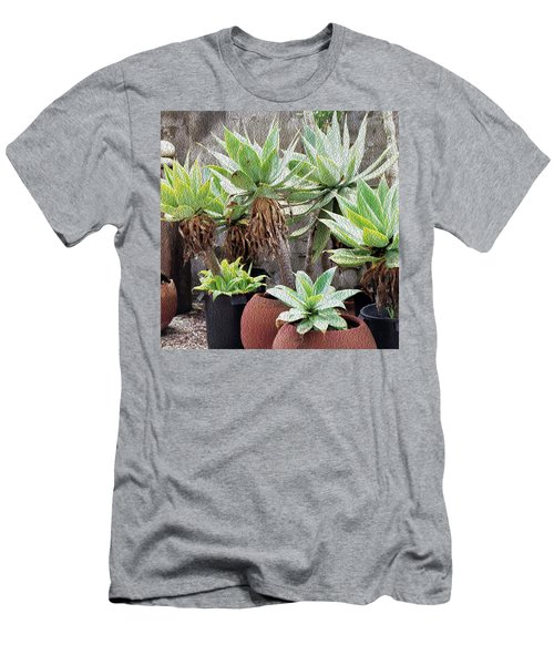 Potted Agave Plants Men's T-Shirt (Athletic Fit)
