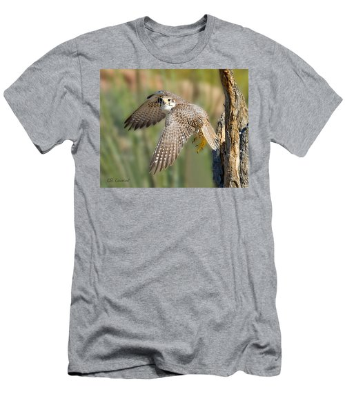 Prairie Falcon Taking Flight Men's T-Shirt (Slim Fit) by CR  Courson