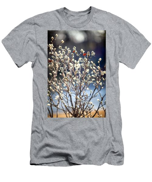Pussy Willow Men's T-Shirt (Slim Fit) by Robert Clifford