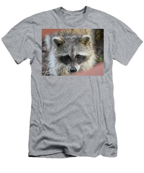 Raccoon's Gorgeous Face Men's T-Shirt (Athletic Fit)