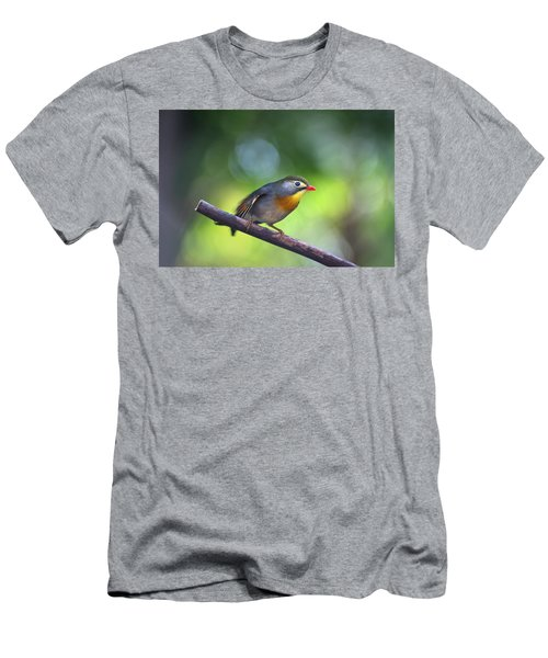 Red Billed Leiothrix Men's T-Shirt (Athletic Fit)