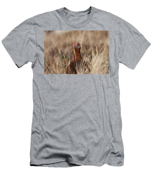 Red Grouse Calling Men's T-Shirt (Athletic Fit)