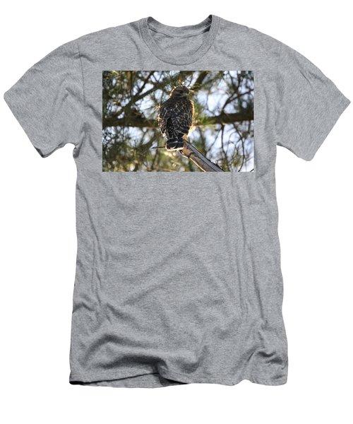 Red Shouldered Hawk Fledgling Men's T-Shirt (Athletic Fit)