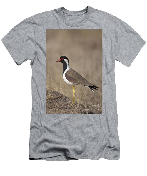 Red-wattled Lapwing Men's T-Shirt (Athletic Fit)