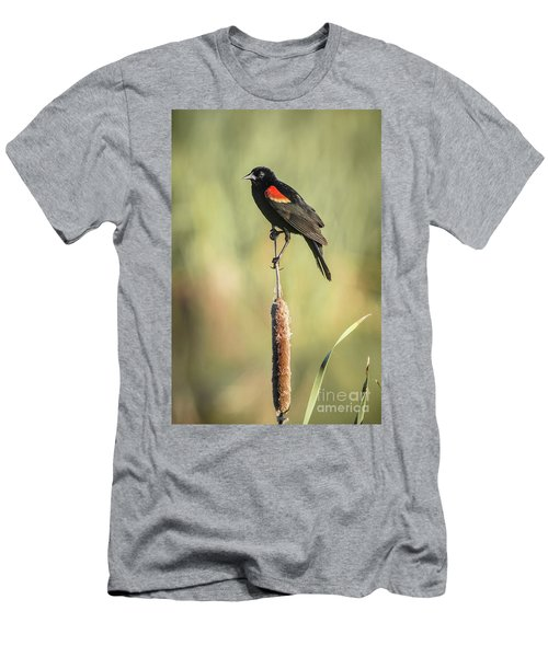 Red-wing On Cattail Men's T-Shirt (Slim Fit) by Robert Frederick