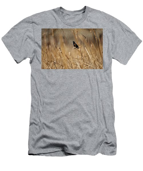 Red Winged Blackbird Men's T-Shirt (Athletic Fit)