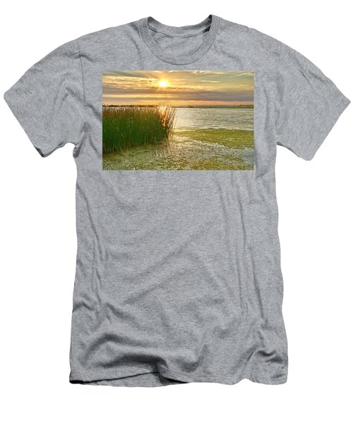 Reeds In The Sunset Men's T-Shirt (Athletic Fit)