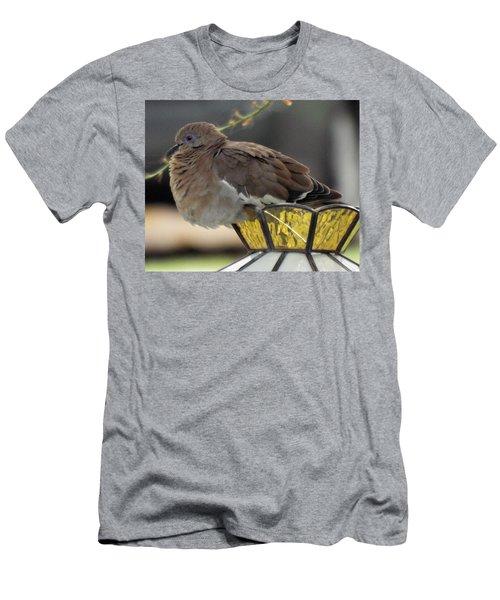 Resting Dove Men's T-Shirt (Athletic Fit)