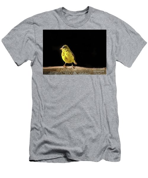Resting Lesser Goldfinch Men's T-Shirt (Athletic Fit)