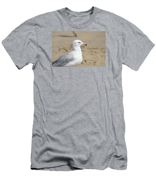 Ring-billed Gull Men's T-Shirt (Athletic Fit)