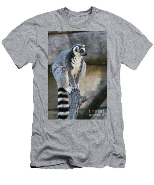 Ring-tailed Lemur #7 Men's T-Shirt (Athletic Fit)