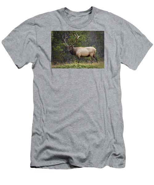 Rocky Mountain National Park Bull Elk Men's T-Shirt (Slim Fit) by John Vose
