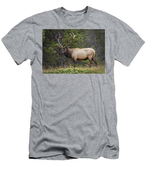 Rocky Mountain National Park Bull Elk Men's T-Shirt (Athletic Fit)