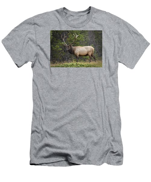 Rocky Mountain National Park Bull Elk Men's T-Shirt (Athletic Fit)
