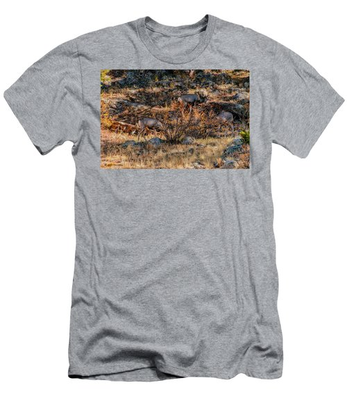 Rocky Mountain National Park Deer Colorado Men's T-Shirt (Athletic Fit)