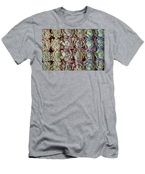 Rows Of Succulents  Men's T-Shirt (Slim Fit) by Catherine Lau